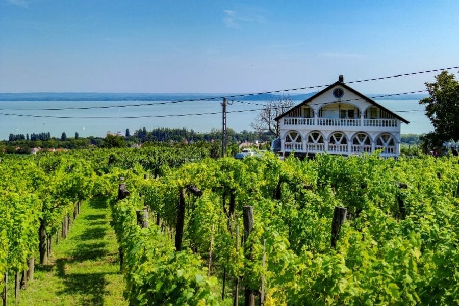 Badacsony vineyard