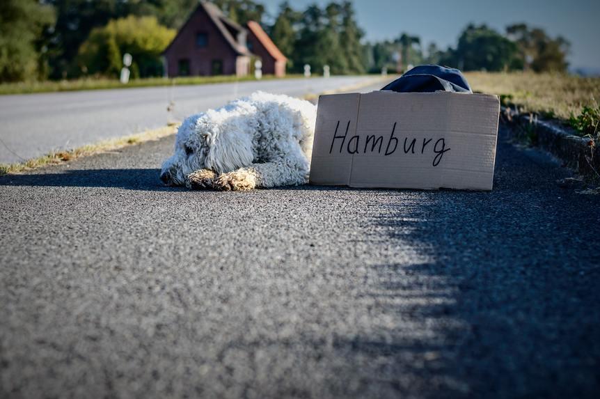hitchhiking sign