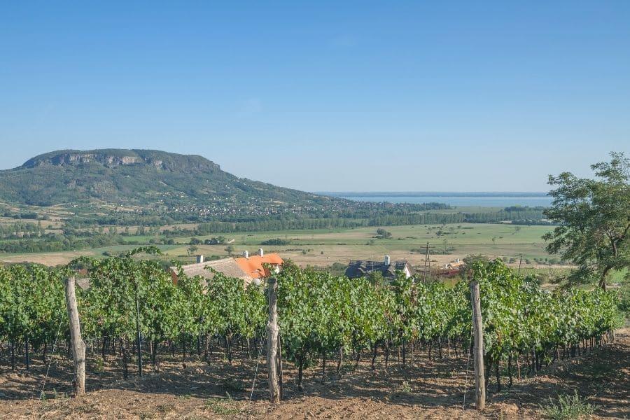 badacsony wine region