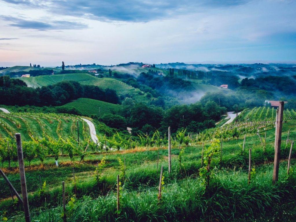 wine tasting in slovenia